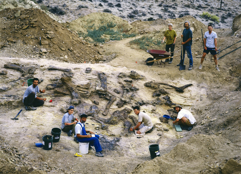 The bones found during excavations