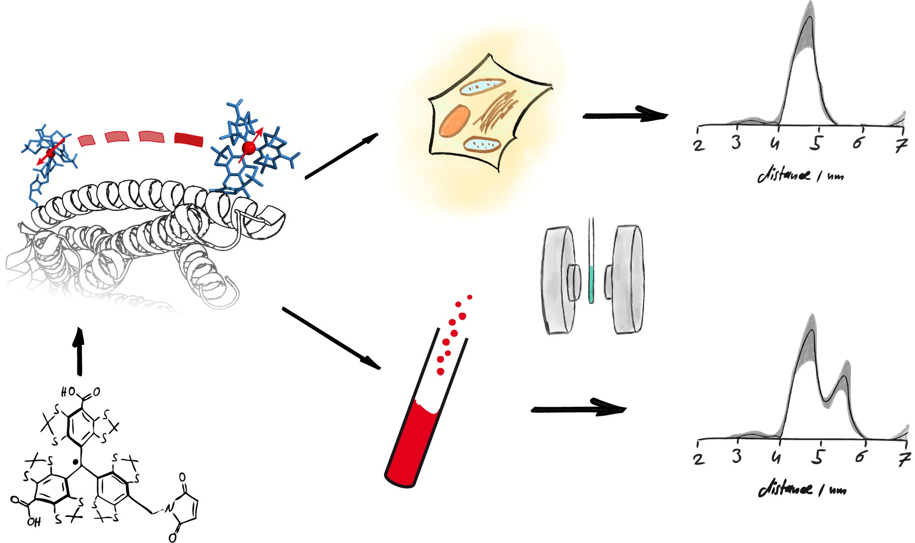 Schematic representation of the study: