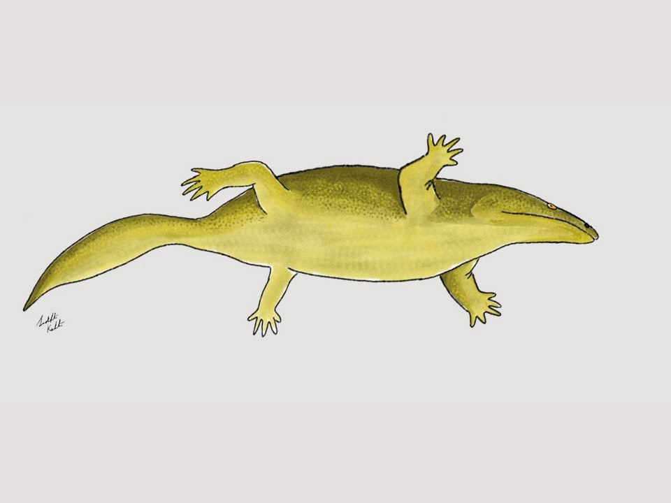 Life reconstruction of the Metoposaurus,