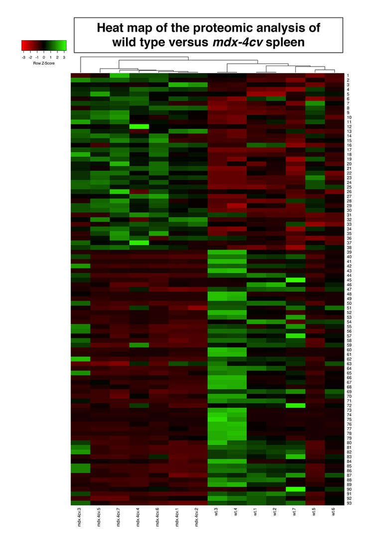 """Heat map"" of proteome analysis:"