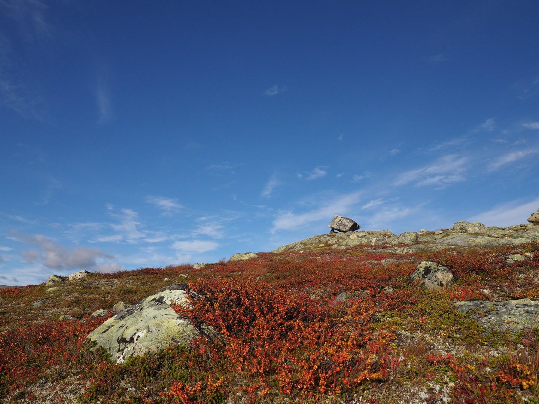 The dwarf birch
