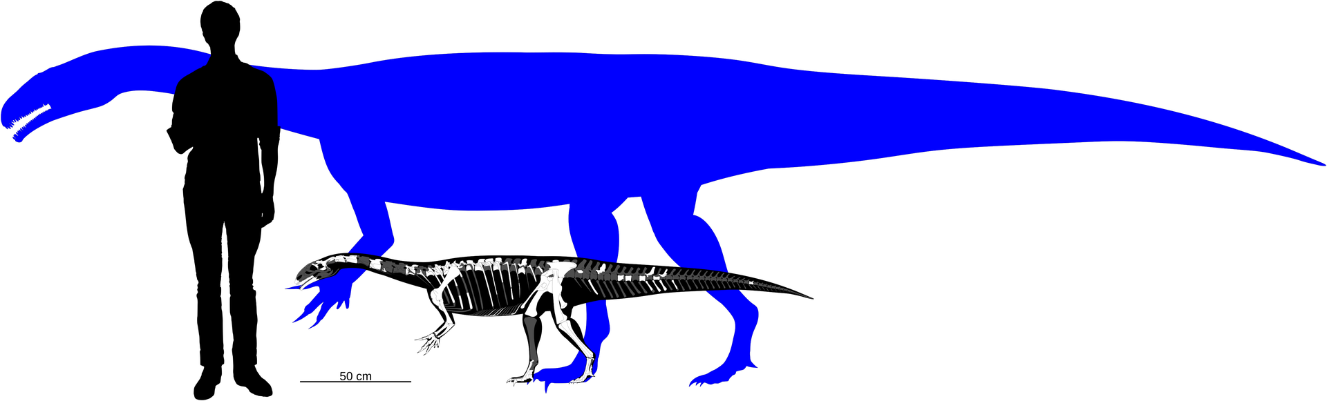 """Skeletal reconstruction of """"Fabian"""" (foreground)"""