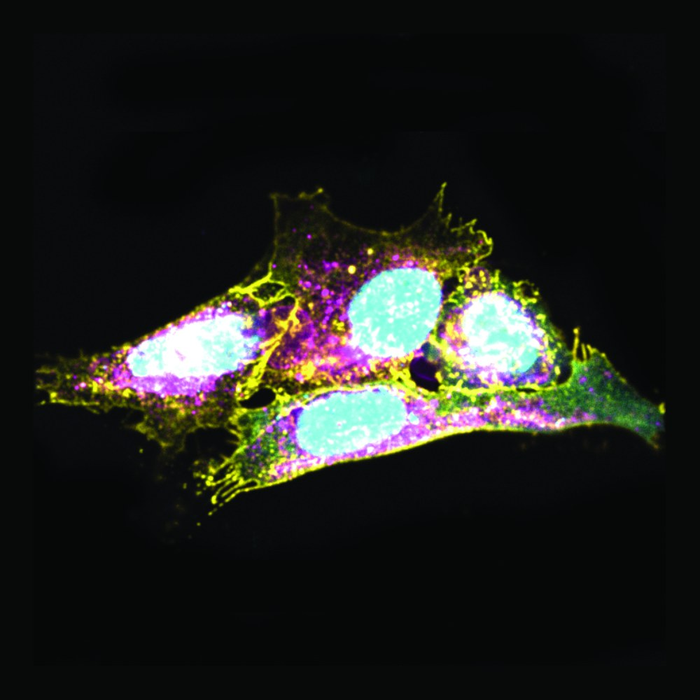 The image shows cells
