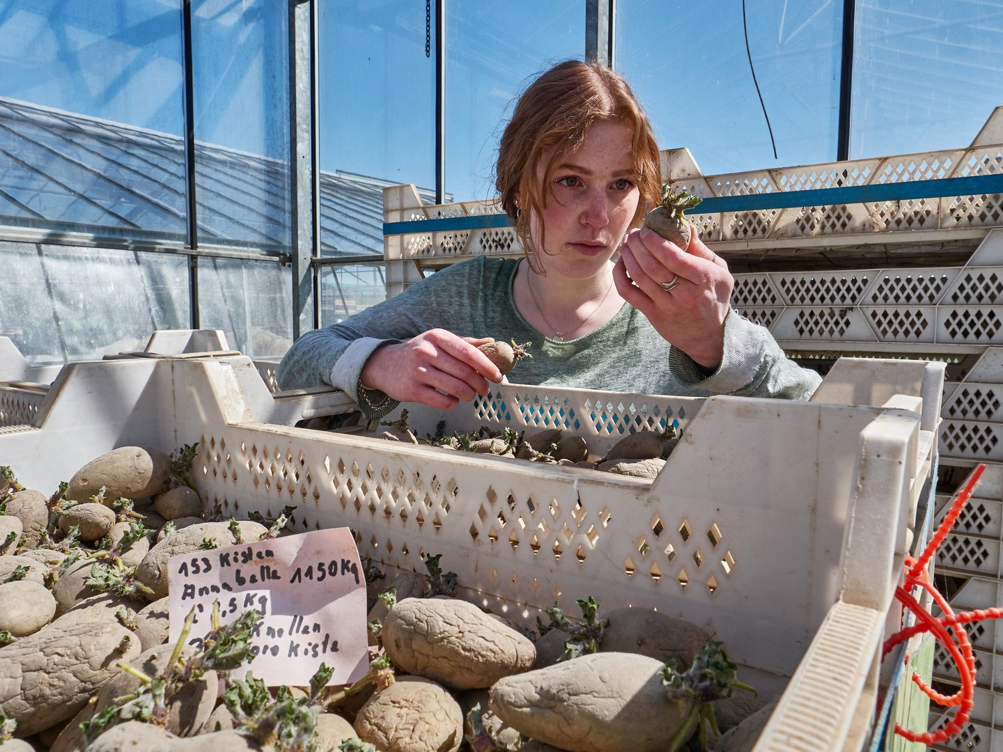 Lea Kamps checks whether the potatoes have sprouted enough before they are planted.