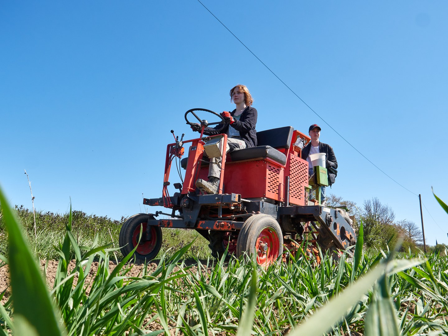 Creating a strip of land to preserve biodiversity:  Lea Kamps controls the seed drill and Maximilian Weitkemper tops up the seed.