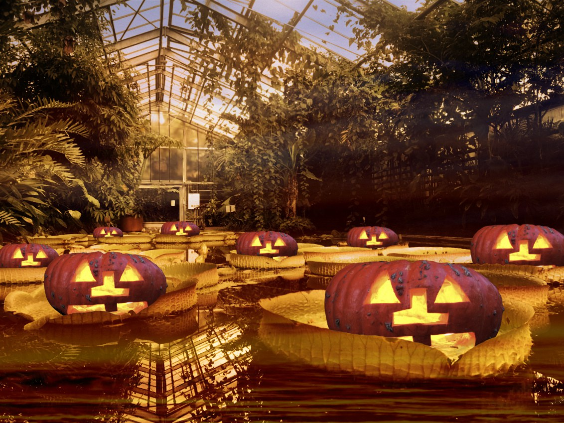 Pumpkins also keep their distance.