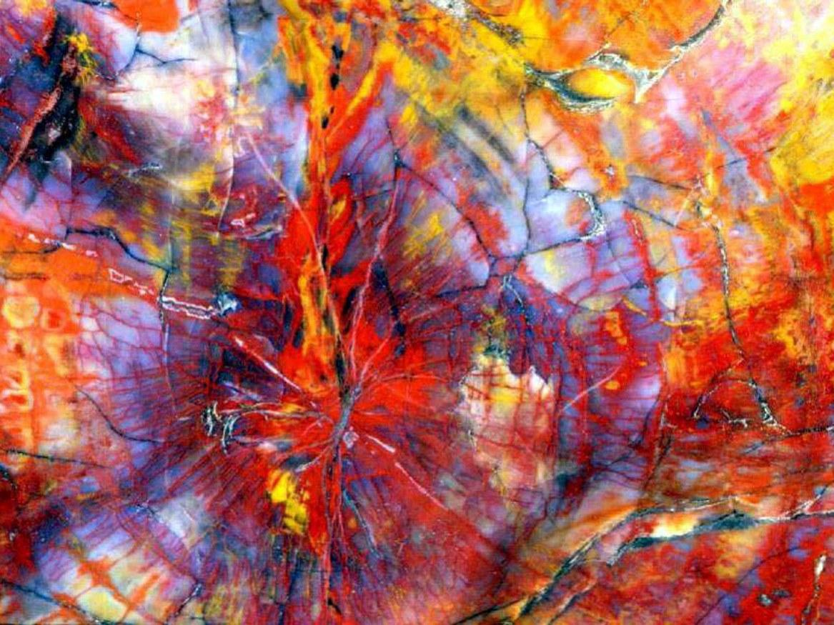 """225 million year old """"rainbow wood"""""""
