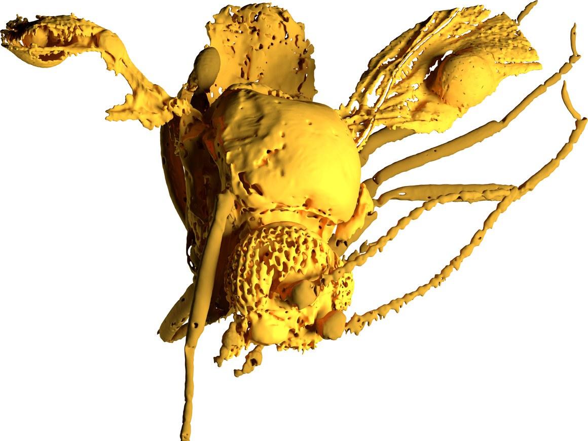 Model of the 54 million-year-old biting midge: