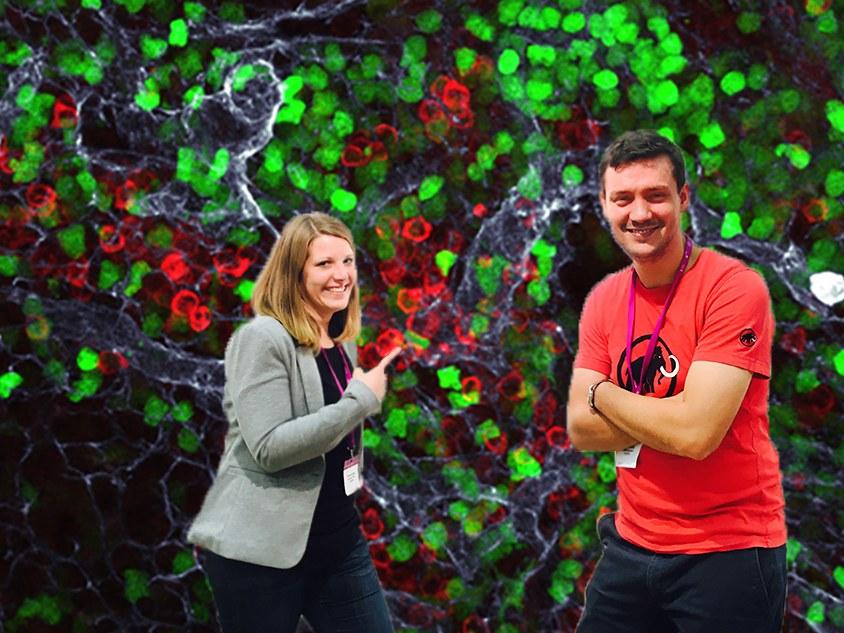 Immune fluorescence: